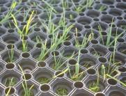 grass-matting