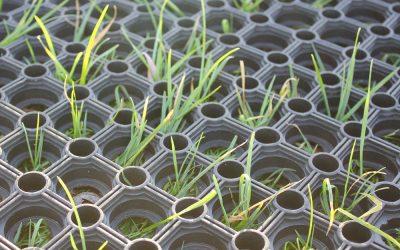 Grass Matting